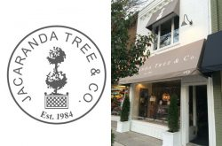 Jacaranda Tree & Co